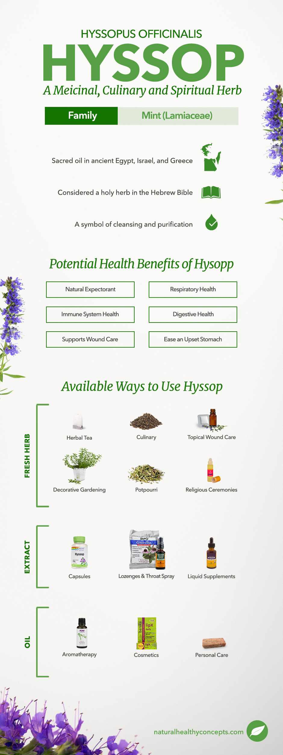 hyssop infographic