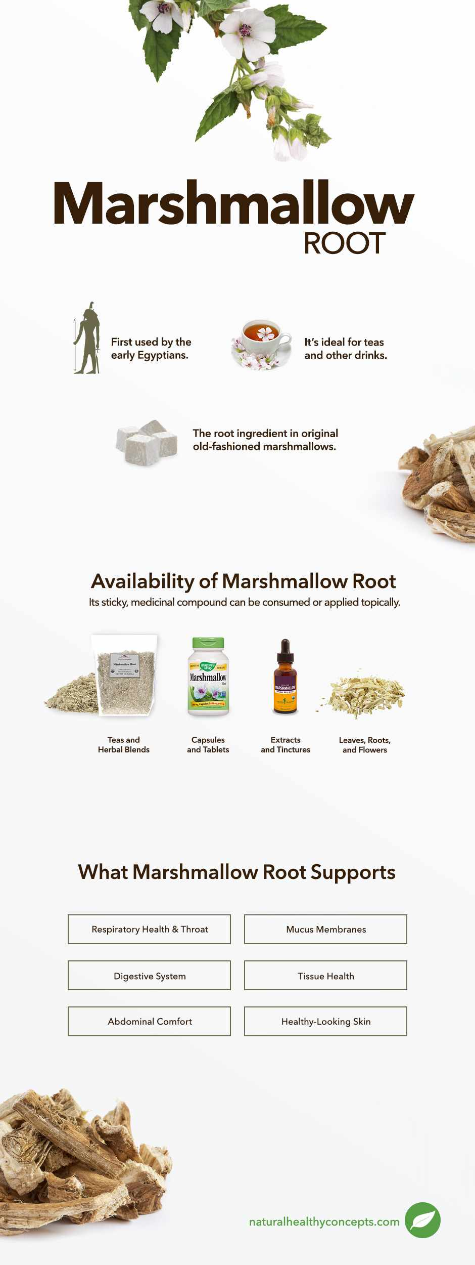 marshmallow root infographic