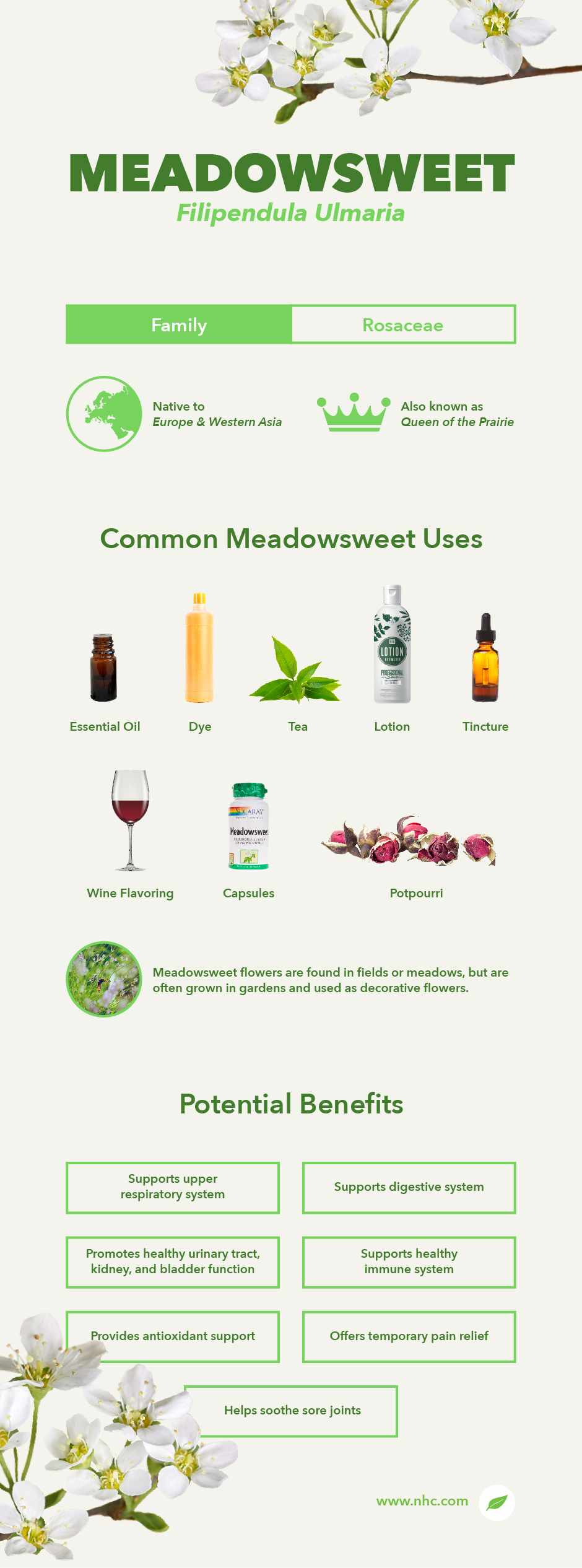 meadowsweet infographic