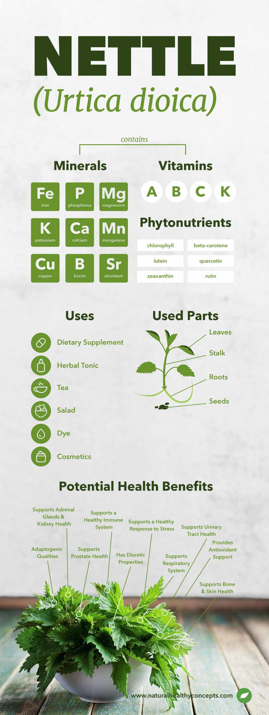 nettle leaf infographic