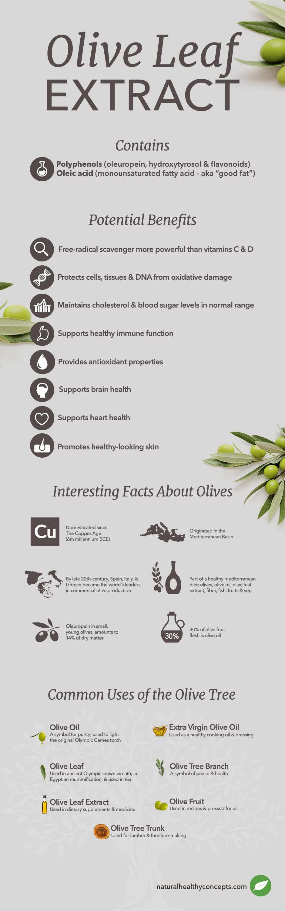 what is olive leaf