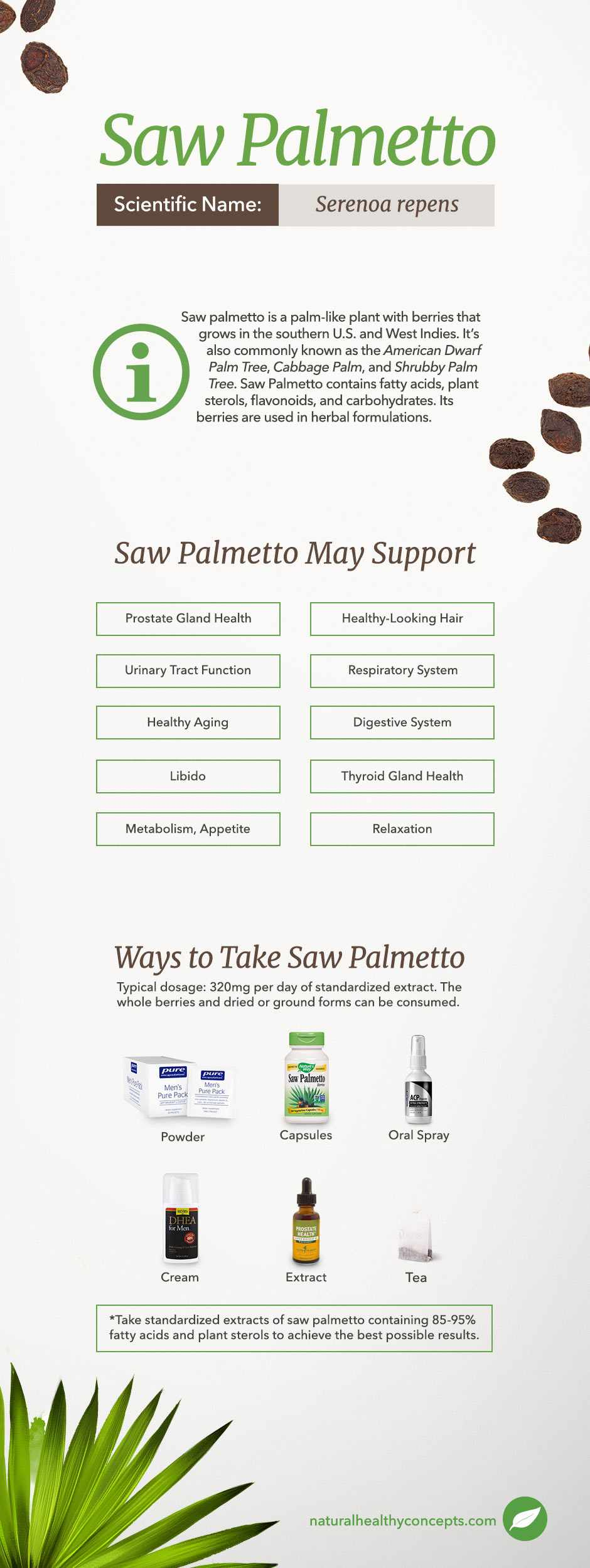 saw palmetto infographic