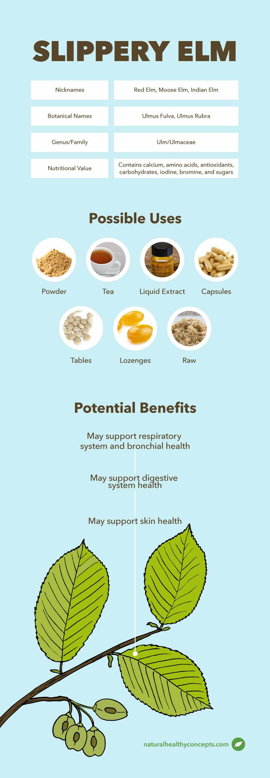 slippery elm infographic