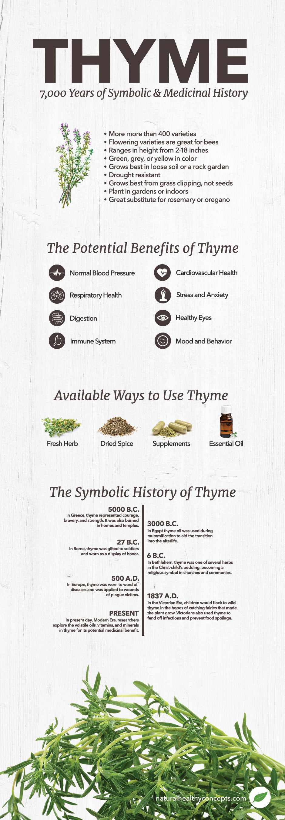 thyme infographic