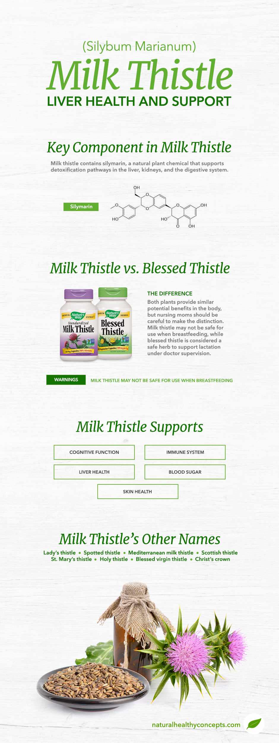 milk thistle infographic