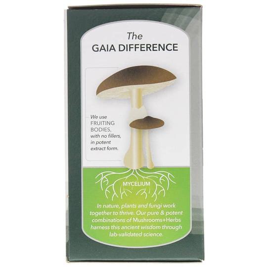 Mushrooms + Herbs Everyday Immune